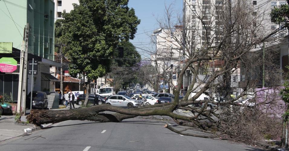 29.ago.2013 - Uma árvore de grande porte caiu na manhã desta quinta-feira (29) na Alameda dos Nhambiquaras, em Moema, zona sul de São Paulo, interditando a via