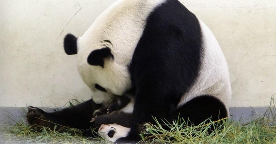 2.set.2013 - Panda gigante filhote Yuan Zai, primeira da raça nascida em Taiwan, brinca com a mãe no zoológico de Taipé. A foto foi disponibilizada nesta segunda-feira (2)
