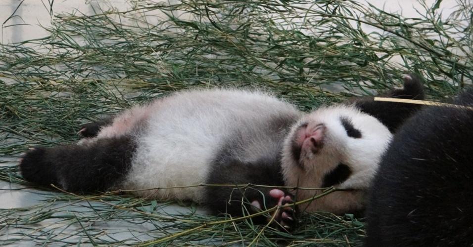 3.set.2013 - Panda gigante nascida em 7 de julho descansa em zoológico de Taipé, em Taiwan, em foto divulgada nesta terça-feira (3)