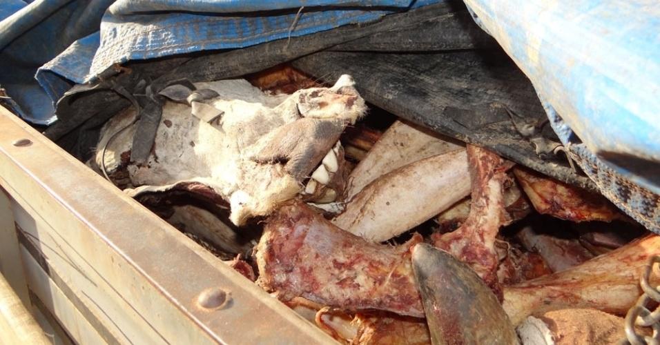 4.set.2013 - Policiais militares apreenderam nesta quarta-feira (4) um caminhão carregado com carne, couro e ossos de animais abatidos ilegalmente, em estrada que dá acesso à comunidade do Jacaré, em Brumado, na Bahia. A carne seria entregue em um restaurante na cidade