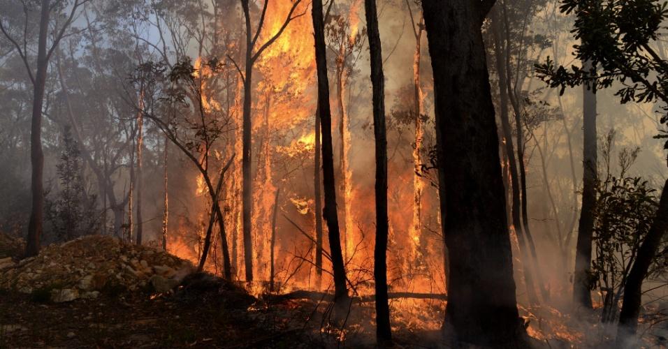 11.set.2013 - Bombeiros voluntários tentam extinguir chamas em incêndio nas montanhas Azuis, 70 km a oeste de Sydney (Austrália), nesta quarta-feira (11). Cerca de 40 incêndios florestais se espalham sem controle pelo sul do país por causa do tempo seco, dos ventos e das altas temperaturas, acima de 30ºC. A temporada de incêndios na Austrália geralmente ocorre entre a primavera e o verão
