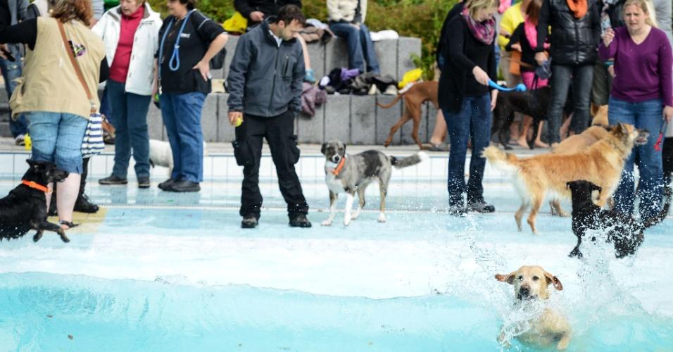21.set.2013 - Cães nadam em piscina pública em Bamberg, no sul da Alemanha. A piscina foi aberta exclusivamente para animais por um dia