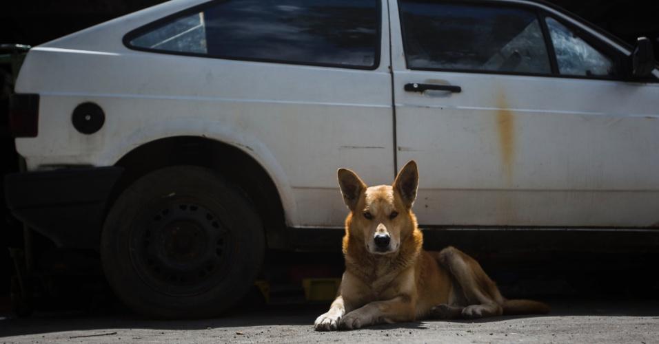 26.set.2013 - Cão Beethoven espera em oficina mecânica dono que morreu há dois meses de ataque cardíaco, em São Paulo
