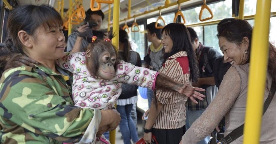 26.set.2013 - Orangotango fêmea chamada Maomao estende a mão para passageiros em um ônibus que vai para o parque da vida selvagem Yunnan, em Kunming, na província de Yunnan, na China. Uma nova linha de ônibus que leva visitantes para o parque iniciou uma operação teste na quarta-feira (25) e contou com a presença de alguns animais do parque