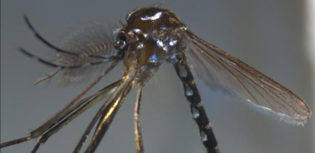 """O Brasil continua a ter uma alta incidência de dengue, cujo vírus é transmitido pelo """"Aedes aegypti"""" e """"Aedes albopictus"""", os mesmos mosquitos que transmitem a Chikungunya"""