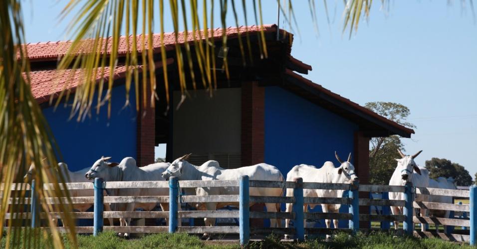 """""""O Zezé gosta de vir aqui com a família, com amigos, para fazer as modas de viola e andar a cavalo. Ele sempre visita os animais e fica com eles por um tempo"""", diz o zootecnista da fazenda, Murilo Canedo"""