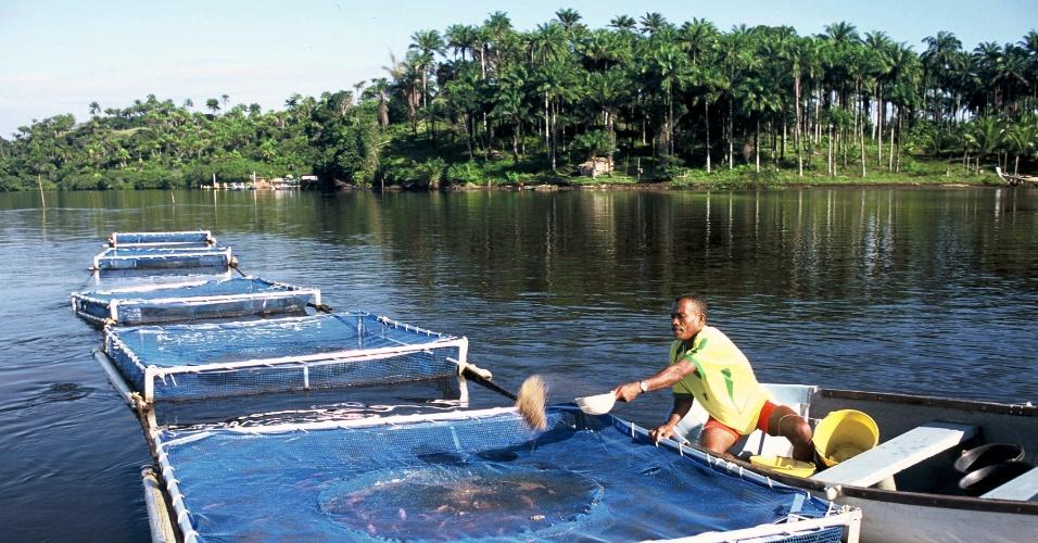 Governo quer mais peixes em tanques para atender aumento for Jaulas flotantes para piscicultura