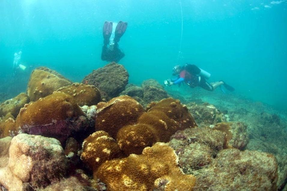 6.out.2013 - Biólogos fazem monitoramento em ambiente marinho formado por Costão Rochoso nas proximidades de Farol da Barra, em Salvador. O Objetivo do monitoramento é identificar colônias do Coral Sol, espécie invasora que mata a vida marinha local