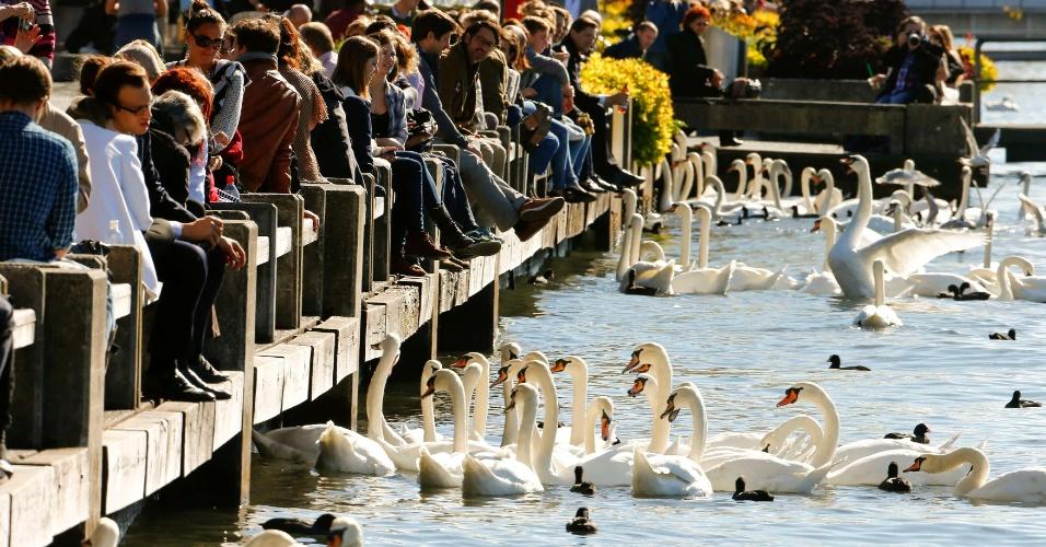 17.out.2013 - Cisnes se reúnem perto de pessoas sentadas sob o sol às margens do lago de Zurique, em Zurique, na Suíça