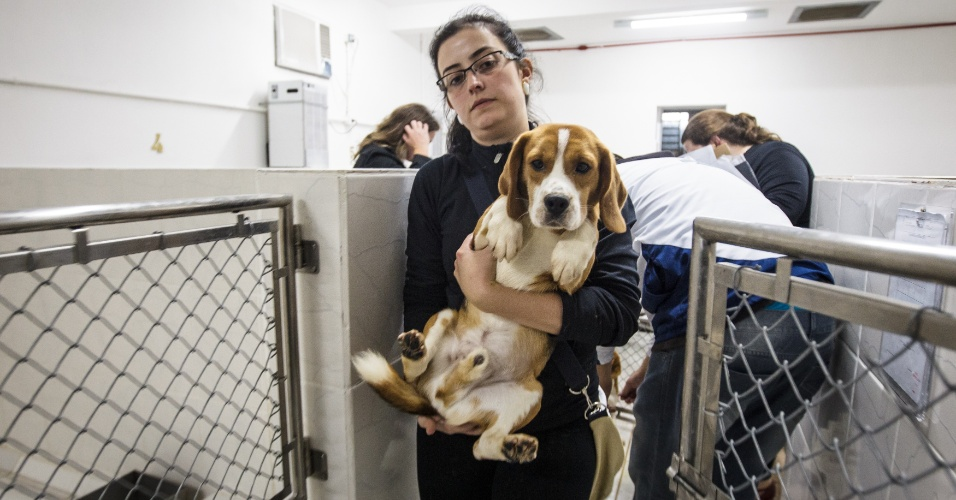 colegio ipe no jardim da saude:Deputado propõe comissão na Câmara para restringir animais em