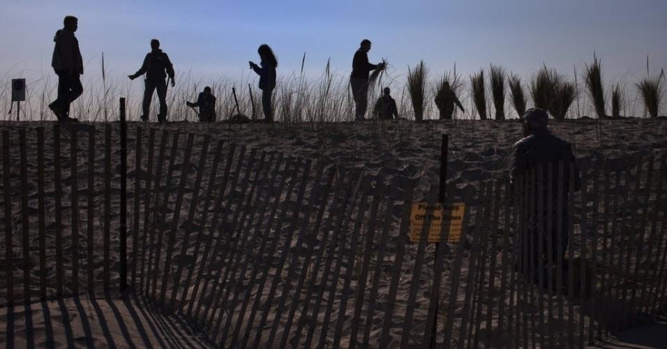29.out.2013 - Voluntários plantam grama em uma duna de areia construída recentemente ao longo de praia em Nova York para proteger comunidade litorânea contra o avanço do mar. A grama ajuda a evitar a erosão da duna. A passagem da supertempestade Sandy, que matou pelo menos 159 pessoas, danificou mais de 650 mil casas, e trouxe prejuízos estimados em US$ 70 bilhões para o país, completa um ano nesta terça-feira