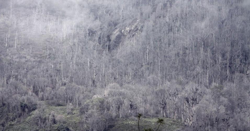 7.nov.213 - Árvores ficam cobertas por cinzas vulcânicas causadas pela erupção do vulcão Sinabung, em Karo, na Indonésia, nesta quinta-feira (7). Cerca de 1.600 pessoas precisaram deixar suas casas
