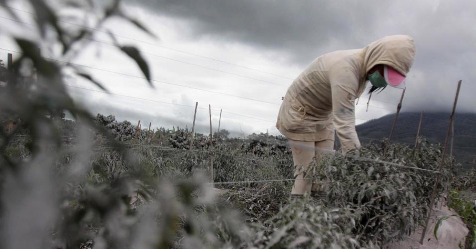 8.nov.2013 - Agricultor tenta recuperar campo coberto de cinzas após a erupção do vulcão Sinabung, em Karo, na Indonésia