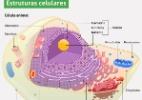 Células: Conheça a história de sua descoberta e entenda sua estrutura - Arte UOL