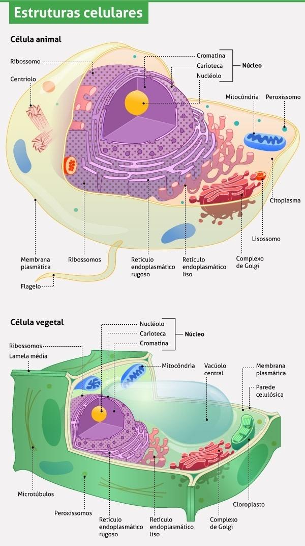 la c lula vegetal Quotes