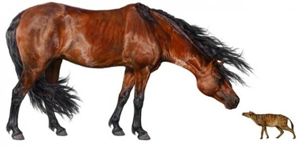 """Imagem mostra um cavalo antigo """"Hyracotherium"""" à direita ao lado de um cavalo de hoje em dia"""