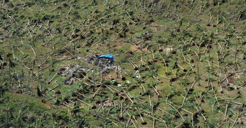 11.nov.2013 - Coqueiros devastados pela passagem do tufão Haiyan próximo à cidade de Guiuan. Autoridades estimam que ao menos 10 mil filipinos morreram no desastre natural