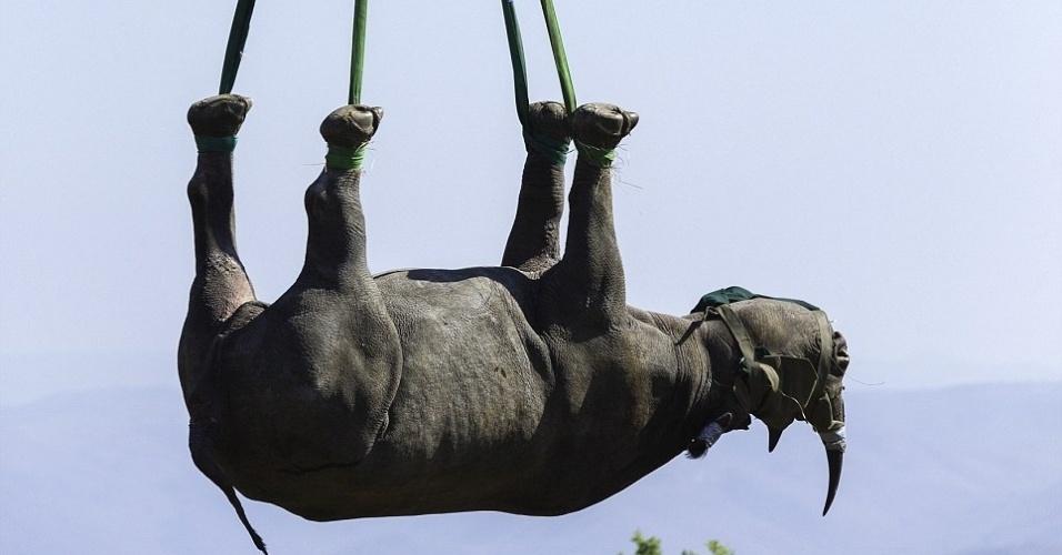 12.nov.2013 - Um rinoceronte preto raro é levantado de cabeça para baixo por um helicóptero para uma unidade de conservação em KwaZulu-Natal,na região leste da África do Sul, durante campanha da WWF contra a caça desses animais. A imagem pode ser desconcertante, mas a forma de transporte é considerada a mais segura, já que o animal passa menos tempo anestesiado