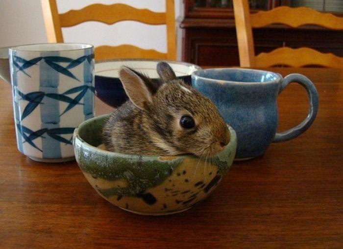 04.dez.2013 - Em vez de xícara, o coelhinho preferiu descansar em uma tigela