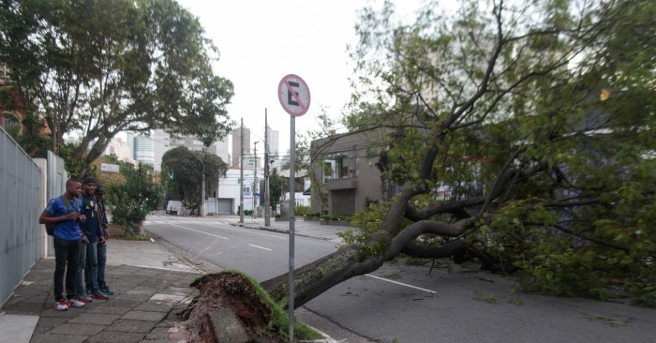 6.dez.2013 - Queda de árvore interdita a alameda Gabriel Monteiro da Silva, altura da João Moura, nos Jardins em São Paulo, SP, na manhã desta sexta-feira (6)