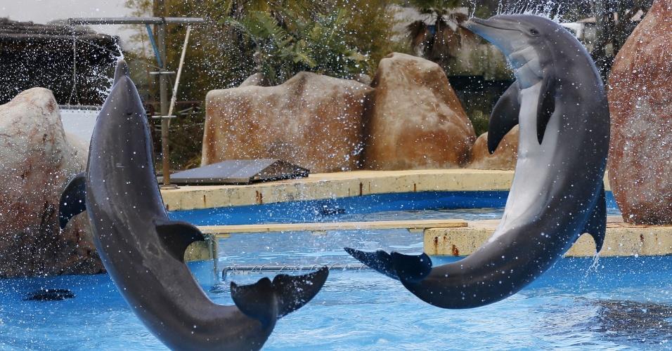 12.dez.2013 - Golfinhos pulam da água no parque Marineland, na cidade de Antibes, na Riviera Francesa