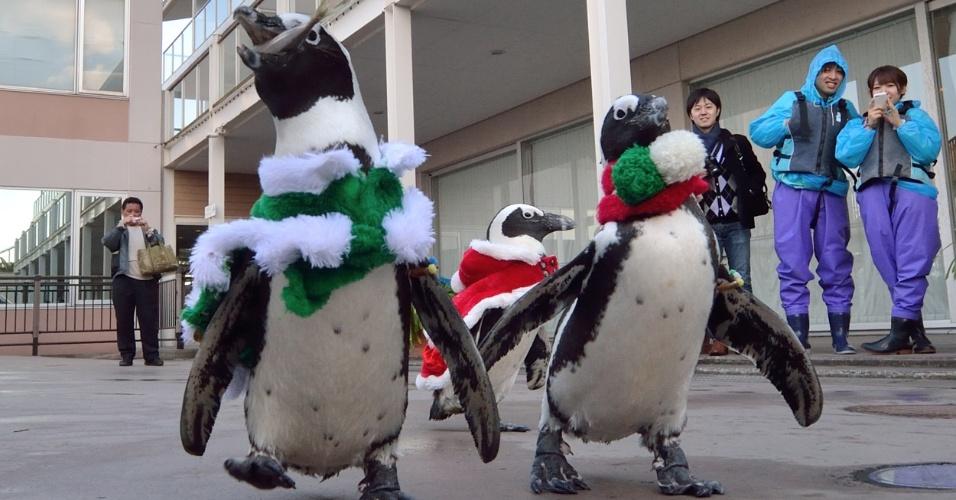 15.dez.2013 - Pinguins com trajes natalinos participam de evento de Natal no aquário Hakkeijima Sea Paradise, no bairro de Yokohama, em Tóquio (Japão). Até o dia 25 de dezembro, o local terá show com pinguins para atrair visitantes