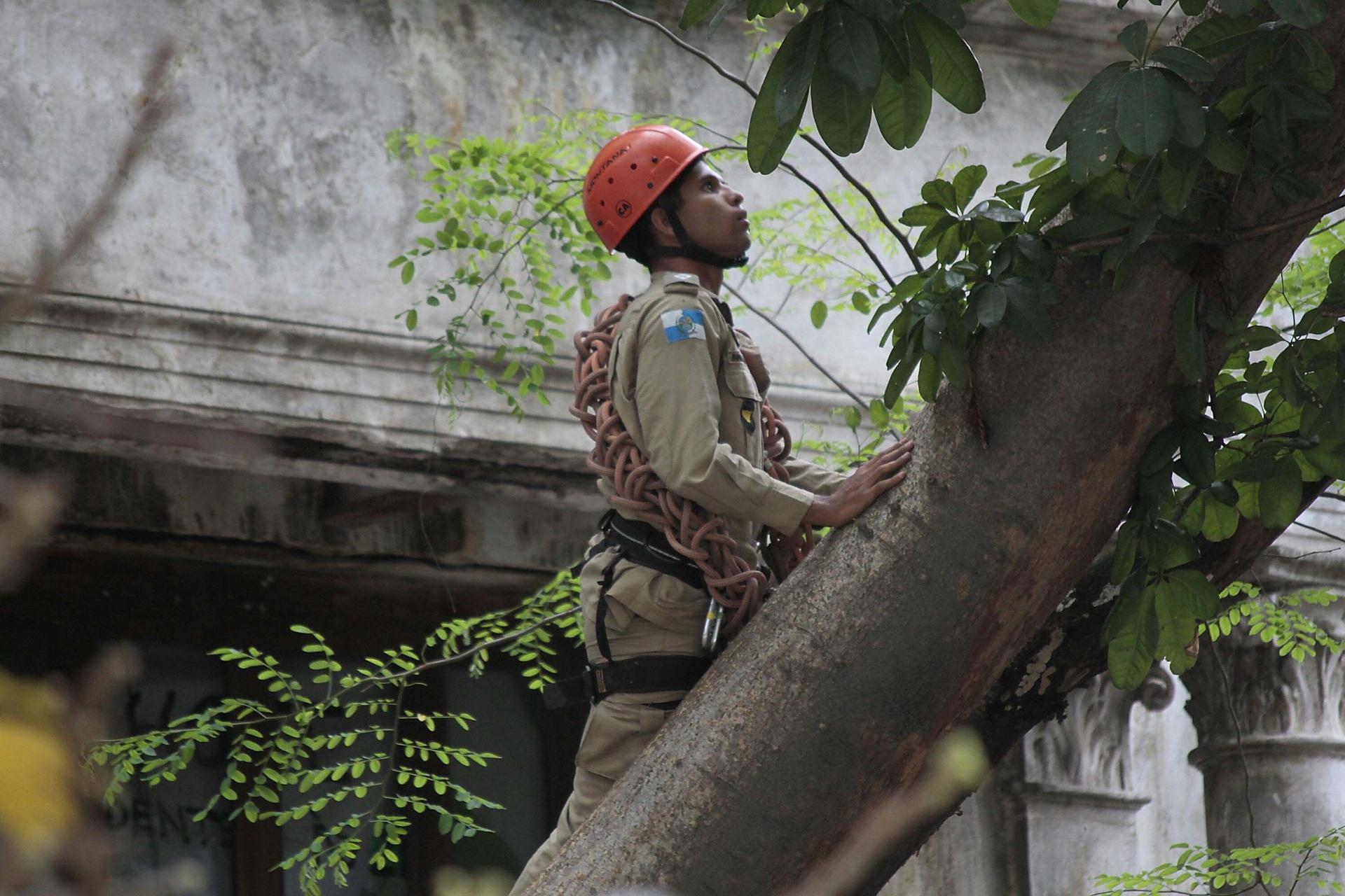 17.dez.2013 - O Corpo de Bombeiros conseguiu retirar o índio Urutau José Guajajara, que estava há cerca de 26 horas em cima de uma árvore na área do antigo prédio do Museu do Índio, no Maracanã, na zona norte do Rio de Janeiro. Os militares subiram na árvore com uma escada e chegaram à copa com a ajuda de uma escada magirus