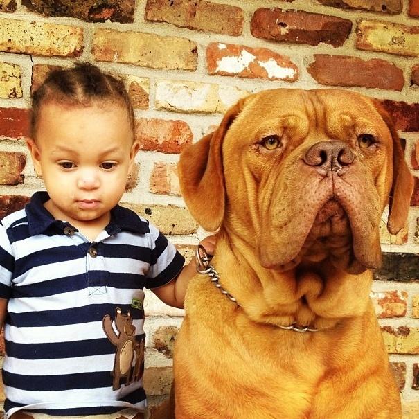 18.dez.2013 - Esse mastiff acompanha sua dona em todas as aventuras feitas ao ar livre