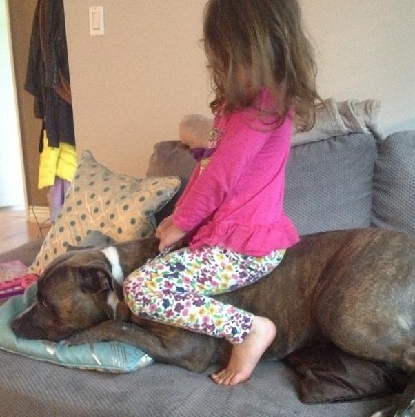 18.dez.2013 - O cachorro de estimação dessa menininha parece não se importar com o fato de que ela está sentada em cima dele
