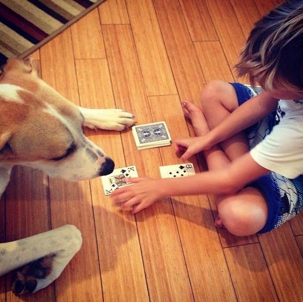 18.dez.2013 - O cãozinho desse garoto é tão companheiro que joga até cartas com o seu dono