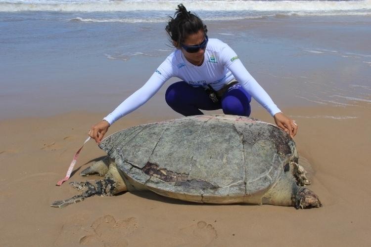 18.dez.2013 -Técnicos do Biomade coletaram dados de 13 tartarugas mortas, encontradas entre os Estados do Maranhão e Piauí, no sábado (14)