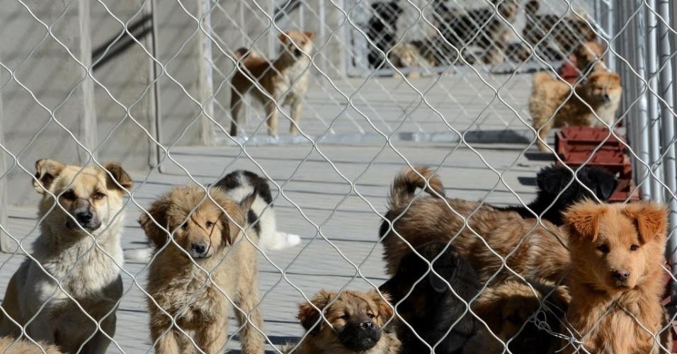 2.jan.2014 - Cachorros permanecem em centro coletivo para animais de rua na cidade de Lhasa, região autônoma do Tibete. O local foi concluído no final de 2013 e começou a receber os cachorros no primeiro dia de 2014. Mais de 600 cães já foram alojados. O centro foi criado para evitar a propagação de doenças