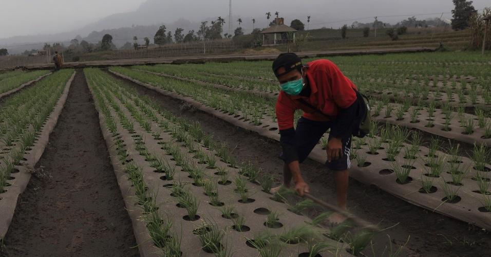 9.jan.2014 - Agricultor usa vara de madeira para limpar cinzas do Monte Sinabung em sua plantação de cebola, em vila no distrito de Karo Payung, na província de Sumatra do Norte (Indonésia). Cerca de 20 mil moradores já foram evacuados desde que uma série de erupções periódicas começou, em setembro de 2013