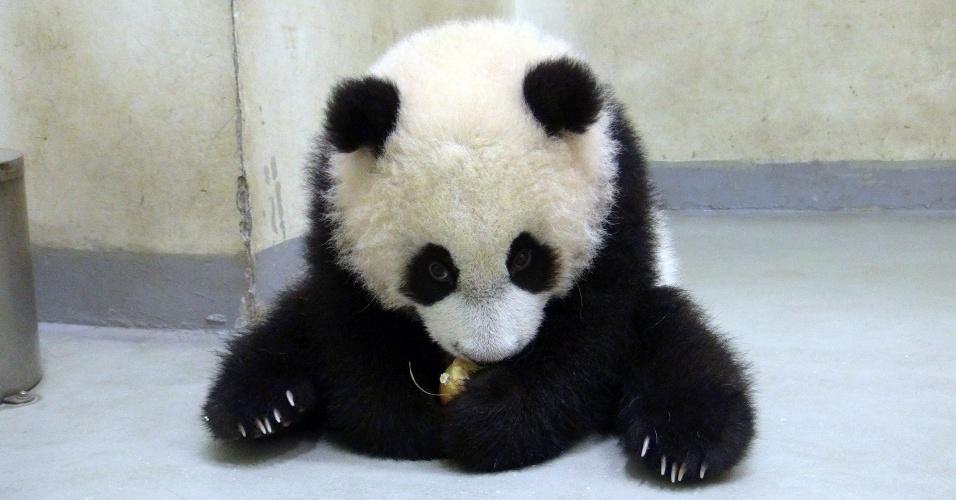9.jan.2014 - Foto divulgada nesta quinta-feira (9) mostra o filhote de panda gigante