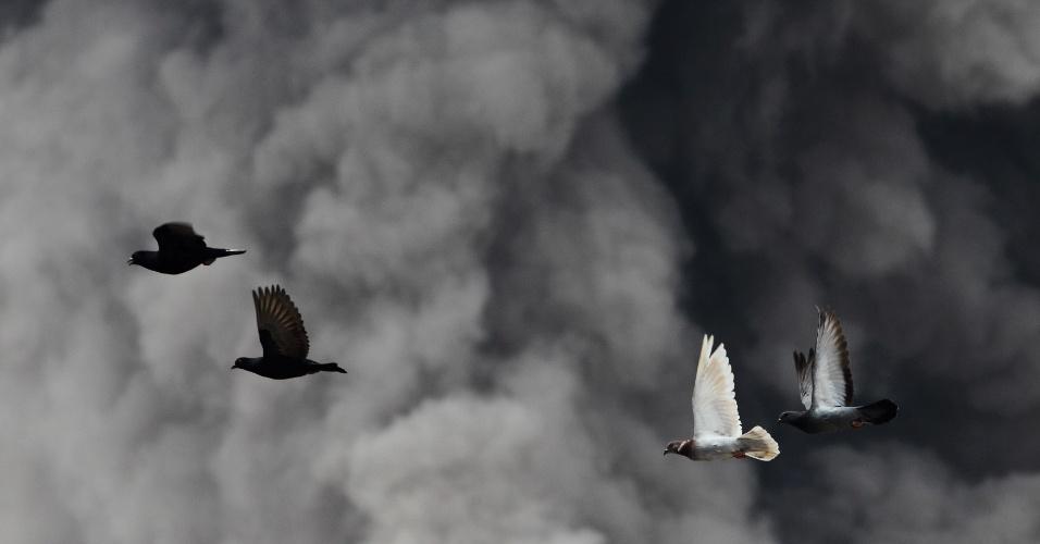 15.jan.2014 -  Pássaros voam em meio às cinzas do vulcão Sinabung, na província de Sumatra do Norte, na Indonésia. De acordo com a mídia local, mais de 25 mil moradores foram retirados de áreas próximas ao vulcão. A erupção fez o governo indonésio subir o alerta de risco para o nível mais alto desde novembro de 2013