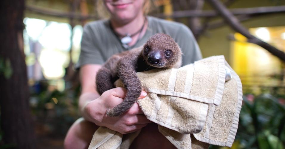 16.jan.2014 - A tratadora de animais Stefanie Silbermann segura um filhote de preguiça nascido em setembro do ano passado no zoológico de Dresden, na Alemanha. Durante o inventário ficou constatado que a preguiça pesa 1,4 kg