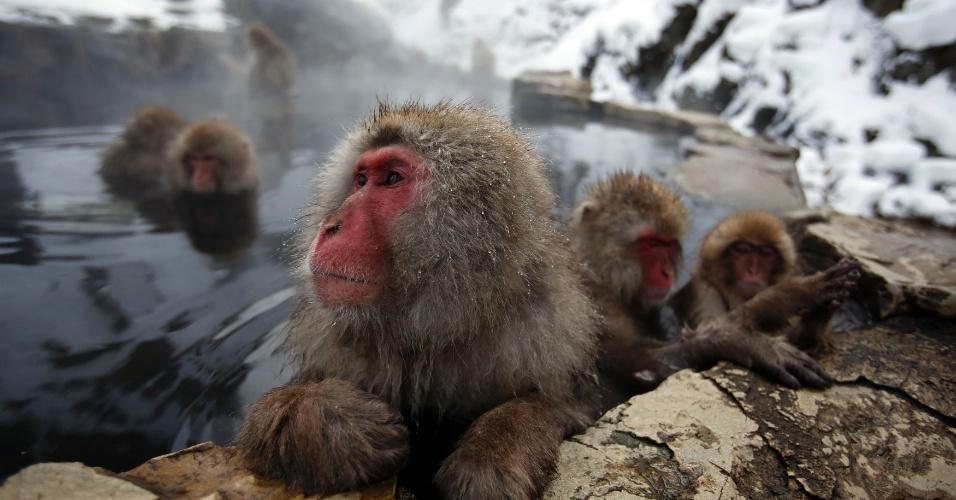 20.jan.2014 - Macacos japoneses (ou macacos da neve) se aquecem em fonte de água quente em meio a um vale coberto de neve na cidade de Yamanouchi, região central do Japão, nesta segunda-feira (20)