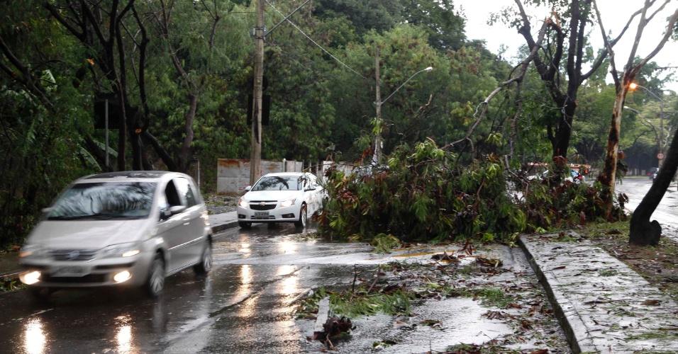 20.jan.2014 - Queda de árvores atrapalha o trânsito na Avenida Deputado Anuar Menhem, em Belo Horizonte, nesta segunda-feira (20)