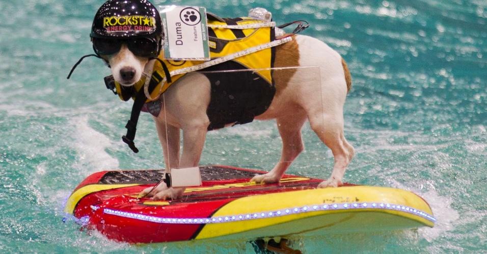 20.jan.2014 - Um cachorro da raça Jack Russel Terrier chamado Duma praticou wakeboard durante uma feira de esportes náuticos em Toronto, no Canadá. A feira é uma das maiores do mundo e exibe mais de 1.000 novos modelos de barcos e motores disponíveis no mercado