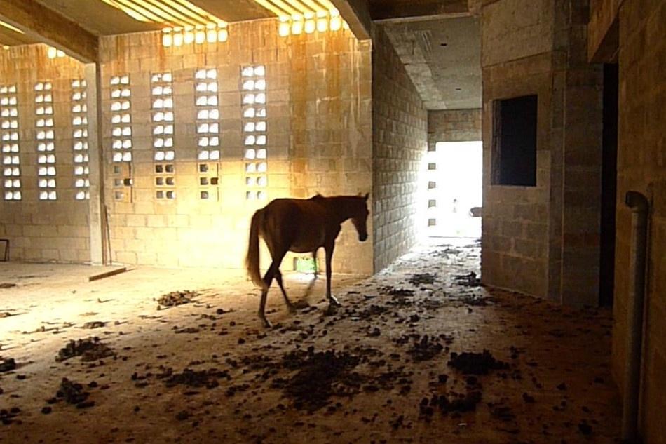 21.jan.2014 - Cavalo dentro de presídio em construção em Imperatriz