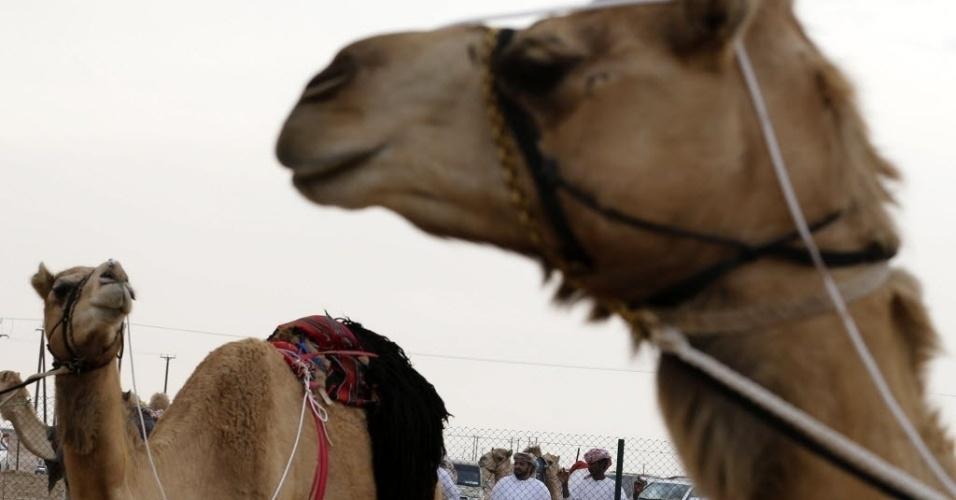 2.fev.2014 - Festival realizado no autódromo Shweihan, em Al-Ain, nos arredores de Abu Dhabi inclui um concurso de beleza de camelos,  leilão de camelo e concursos de artesanato tradicional