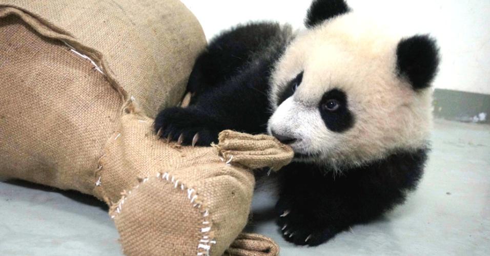 3.fev.2014 - Panda