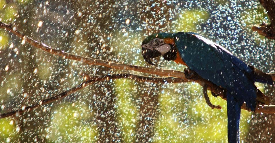 4.fev.2014 - Arara é visto tomando banho de mangueira nesta terça-feira (04), na Lagoa Rodrigo de Freitas, no Rio de Janeiro, RJ, devido a forte calor