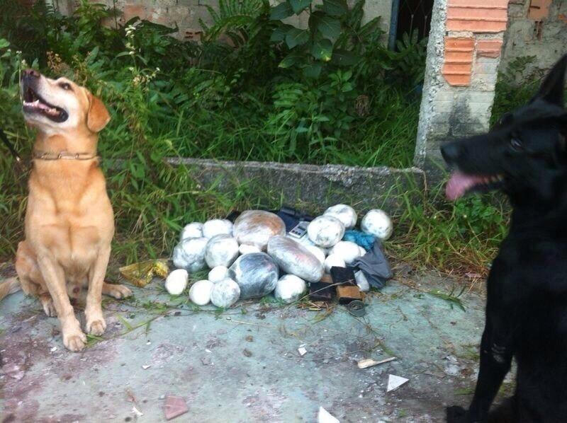 4.fev.2014 - Cães da Polícia Militar encontraram drogas em São Gonçalo, na região metropolitana do Rio de Janeiro. Os cachorros fazem parte do Batalhão de Ações com Cães, que é subordinado ao  Comando de Operações Especiais da PM do Rio