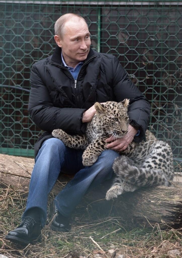 4.fev.2014 - O presidente da Rússia, Vladimir Pútin, acaricia um filhote de leopardo no parque nacional de Sochi. O leopardo foi um dos animais escolhidos como mascote oficial dos Jogos de Inverno de 2014 em Sochi
