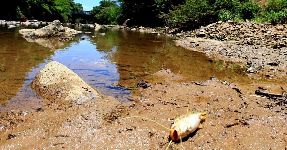 4.fev.2014 - Rio Atibaia, na região de Campinas, interior de São Paulo está com nível de água reduzido, devido à falta de chuvas no Estado