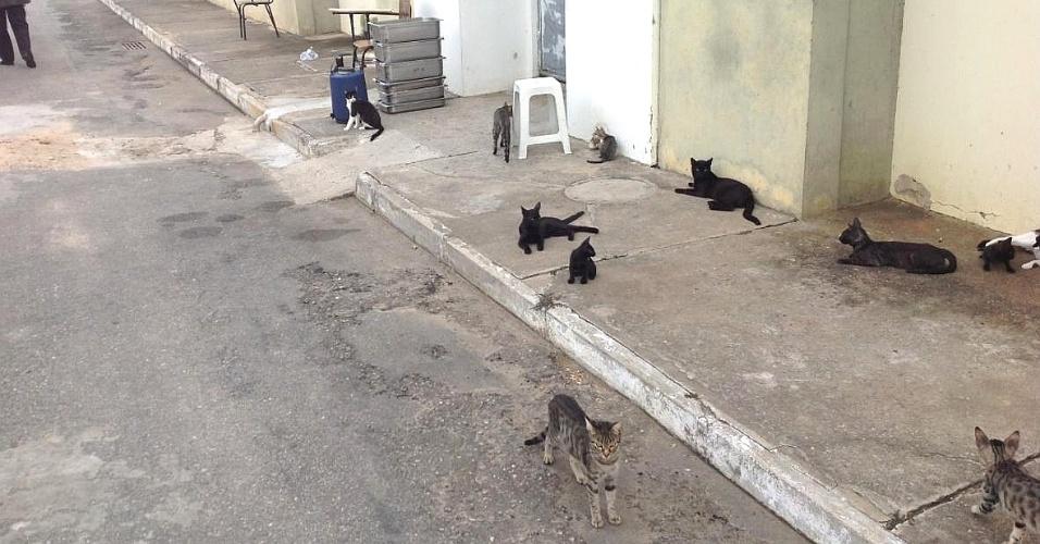 5.fev.2014 - Gatos ficam soltos em presídio em Jequié (BA), para combater escorpiões, baratas e ratos no local. Os animais --cerca de 50-- são criados nos pavilhões, junto com os internos, assim como galinhas, que também são usadas contra a proliferação de insetos no local