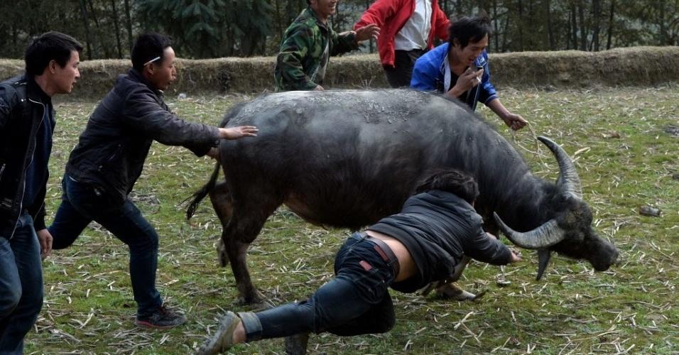 5.fev.2014 - Aldeões tentam pegar um búfalo durante uma competição tradicional das comemorações do Ano-Novo chinês na província de Guizhou, China. As lutas acontecem desde o século 15