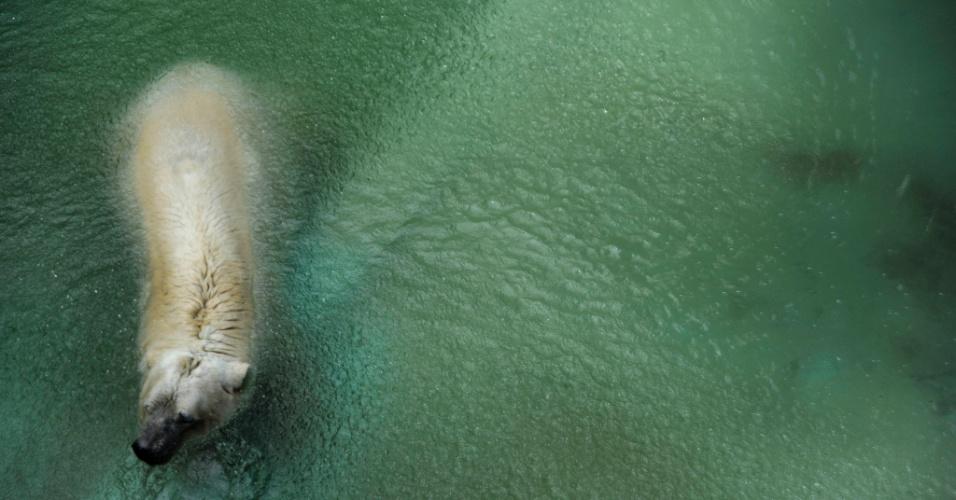 """5.fev.2014 - """"Arthur"""", único urso polar argentino, é retratado em cativeiro em zoológico de Mendoza"""