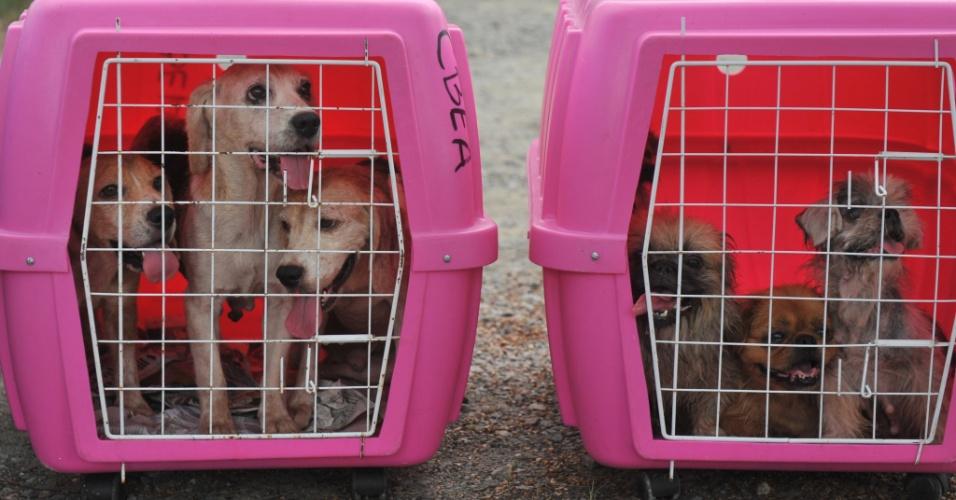 5.fev.2014 - Cães são retirados por equipes da Fundema (Fundação Municipal do Meio Ambiente) e da Polícia Ambiental de canil no bairro Rio bonito, em Joinville (SC), que foi fechado pelos agentes por manter os animais em más condições